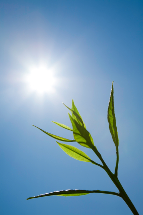leaf-full-sun-blue-sky