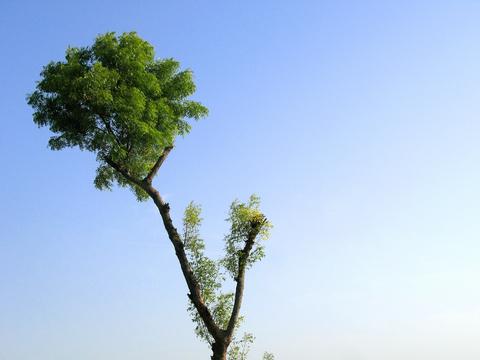 neem_tree