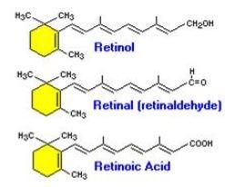 retinol to retinoic acid