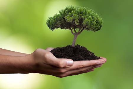 Pollution Protection from Plants