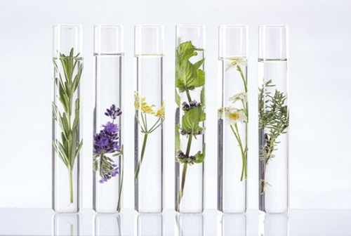 plants-test-tube
