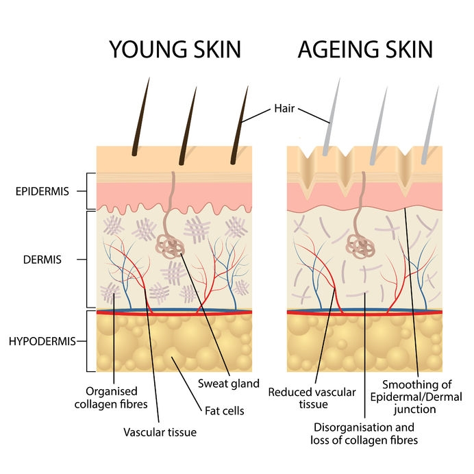 Young Skin vs Old Skin